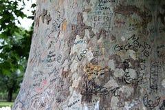 La inscripción en el árbol Fotografía de archivo libre de regalías