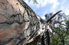 La inscripción en el árbol Imagen de archivo libre de regalías