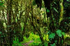 La integridad del bosque Imagen de archivo libre de regalías