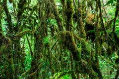 La integridad del bosque Imágenes de archivo libres de regalías