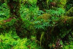 La integridad del bosque Imagenes de archivo