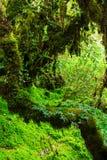 La integridad del bosque Fotos de archivo libres de regalías