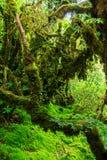 La integridad del bosque Imagen de archivo