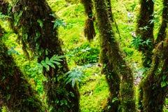 La integridad del bosque Fotografía de archivo libre de regalías