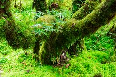 La integridad del bosque Foto de archivo libre de regalías