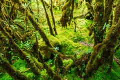 La integridad del parque nacional de Doi Inthanon del bosque Imagenes de archivo