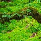 La integridad del parque nacional de Doi Inthanon del bosque Chiang Imágenes de archivo libres de regalías