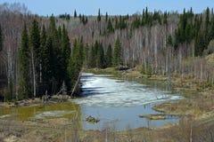 La inundación de la primavera en el taiga siberiano Imagenes de archivo