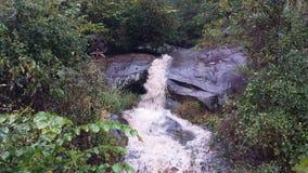 La inundación del bosque crea la cascada Fotos de archivo