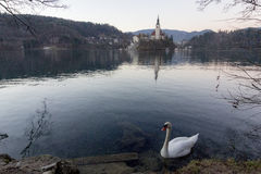 La isla Bled Foto de archivo