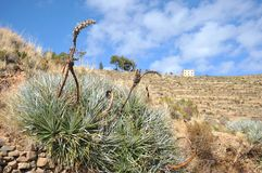 La isla de la luna está situada en el lago Titicaca Foto de archivo libre de regalías
