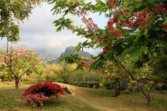 La isla tropical de Mauricio Fotos de archivo