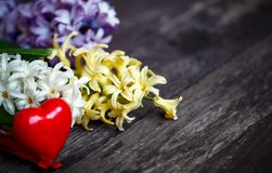 La jacinthe blanche et bleue fleurit avec le fond rouge de coeur Image libre de droits