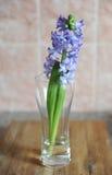 La jacinthe bleue tendre fleurit dans un vase en verre Fond rose gentil, table en bois, humeur de ressort Image stock