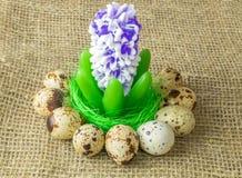 La jacinthe de fleur se trouvant sur la couleur vert clair de vert de sisal de remplisseur est entourée par des oeufs de caille s Image stock