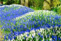La jacinthe des bois fleurit la rivière Photo libre de droits
