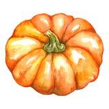 La Jack-o-lanterne végétale Halloween de potiron orange d'aquarelle a isolé Photos libres de droits