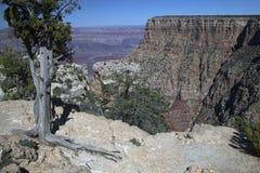 La jante du sud de Grand Canyon images libres de droits