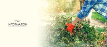 La jardinière de femme nettoie des feuilles de branches dans le modèle de jardin photo libre de droits