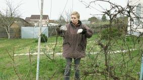 La jardinière de fille de pays taille des brindilles de raisin de vigne banque de vidéos