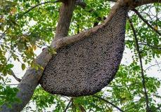 La jerarquía de abejas en el árbol Foto de archivo