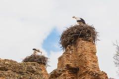 La jerarquía de la cigüeña en el top de la torre en Chellah que es el mundo foto de archivo