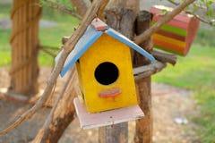 La jerarquía del pájaro colorido Fotos de archivo