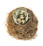La jerarquía del pájaro original con los billetes de dólar y los huevos de codornices Nuevo negocio que comienza por los billetes Fotografía de archivo libre de regalías