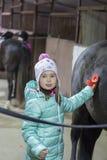 La jeune belle fille prend soin du cheval Photographie stock