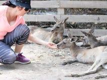 La jeune femme alimente un kangourou au zoo australien Gan Guru dans les kibboutz Nir David, en Israël Photo libre de droits