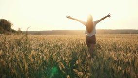 La jeune femme mince marche entre les oreilles du blé d'or dans le coucher du soleil, vue arrière banque de vidéos
