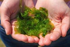 La jeune femme se tient dans l'algue de laminaria de mains Petit d?jeuner, d?jeuner, d?ner Cru, vegan, nourriture saine, cuisine  image libre de droits