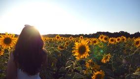 La jeune fille marchant le long des tournesols mettent en place sous le ciel bleu au coucher du soleil Éclat de Sun au fond Suive banque de vidéos