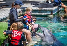 La jeune fille plaçant la boule de panier dans les dauphins disent du bout des lèvres au monde de mer, Brisbane, Queensland, Aust image libre de droits