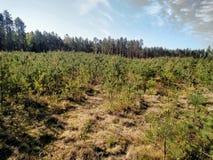 La jeune forêt pendant le matin photo libre de droits