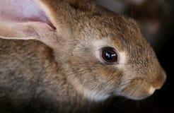 La jeunes ferme et élevage d'animaux de lapin. Image libre de droits