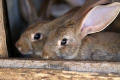 La jeunes ferme et élevage d'animaux de lapin. Photos stock