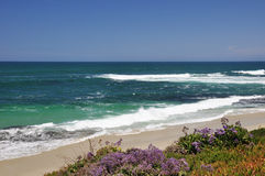 La Jolla beach. Wildflowers grow close to the water's edge at this La Jolla beach in Southern California stock image