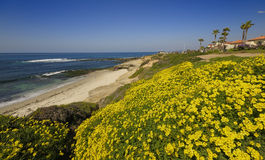 La Jolla Beach. Flowers blooming at La Jolla Beach in a sunny spring day Stock Images