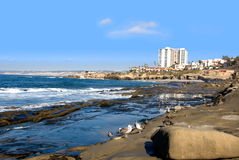 La Jolla California Royalty Free Stock Photo