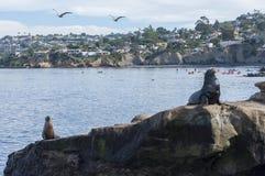 La Jolla Cove in California Stock Photography