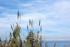 La Jolla Cove coast trail landscape Royalty Free Stock Photography