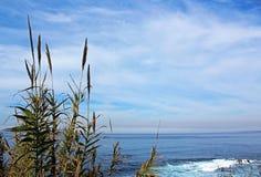 La Jolla Cove coast trail landscape Royalty Free Stock Photos