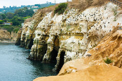 La Jolla Cove - Coastline - Sea wall Royalty Free Stock Photo