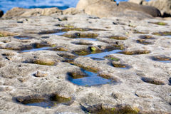 La Jolla Tide Pools Royalty Free Stock Images