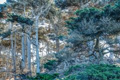 Diversity Graces the Coastal Landscape of California. From La Jolla to Carmel you will find this State`s display of Nature some of the most inspiring anywhere in Royalty Free Stock Image