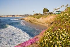La- Jollaklippen mit gelben Blumen Lizenzfreies Stockbild