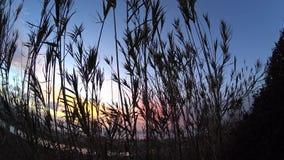 La- Jollasegelflugzeughafen-Sonnenuntergangtireur 1 stock video