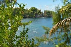 La jungle d'Hawaï images libres de droits