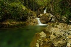 La jungle verte photographie stock libre de droits